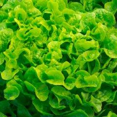 Product - Greentense