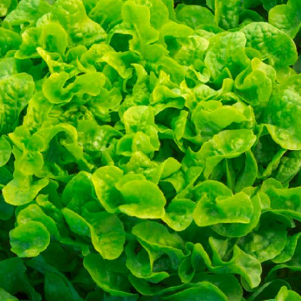 Product image - Greentense