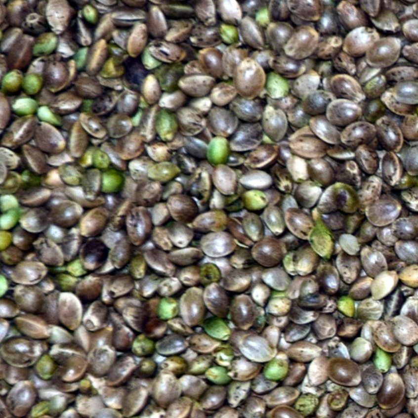 Product image - Hemp Seed Oil
